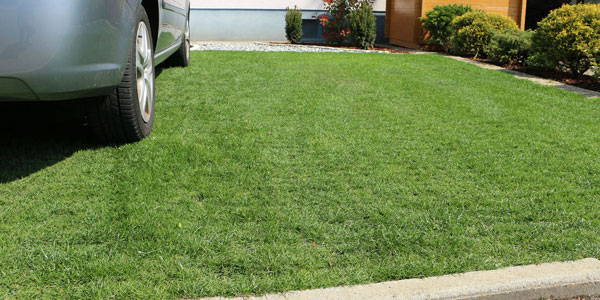 Perfect lawn with grass protection